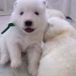 かわいい動物の動画ランキングベスト5【まとめ】