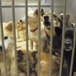 ペット殺処分の対策方法。年間16万の命が焼かれている現実。